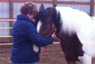 Personal Horse Therapy Sessions as Colorado's Fifth Element Ranch