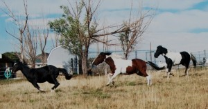 The Heard - Horse Therapy in Colorado at the Fifth Element Ranch